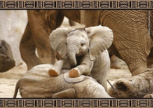 Save the Elephants - set of 3 postcards
